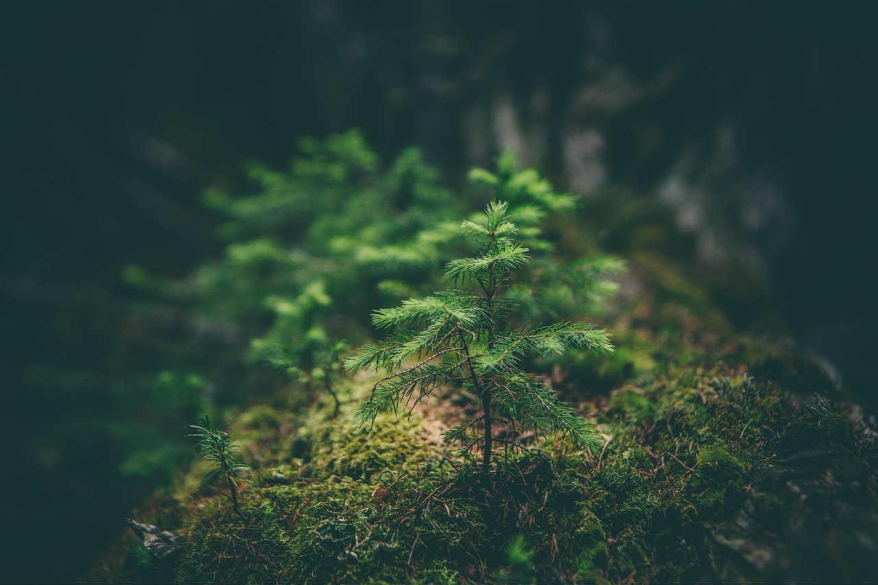 kleine boom groen